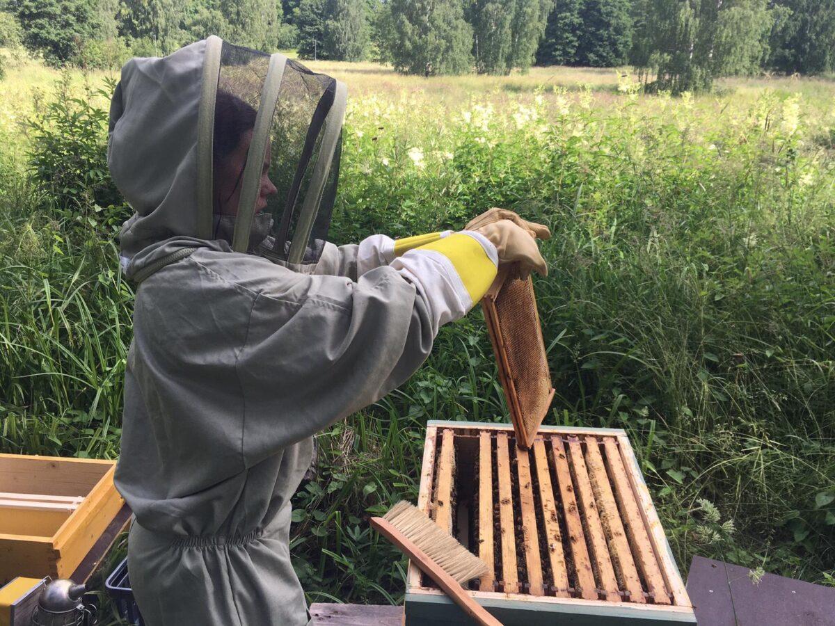 Tullisaaren mehiläispesät