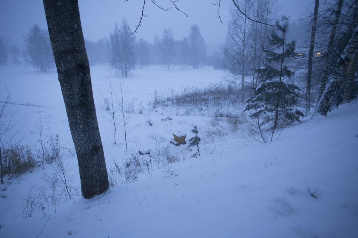 Puiston pesien ensimmäinen talvi